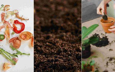 Deviens un vrai expert du compost ! Comprendre en 2 étapes clés