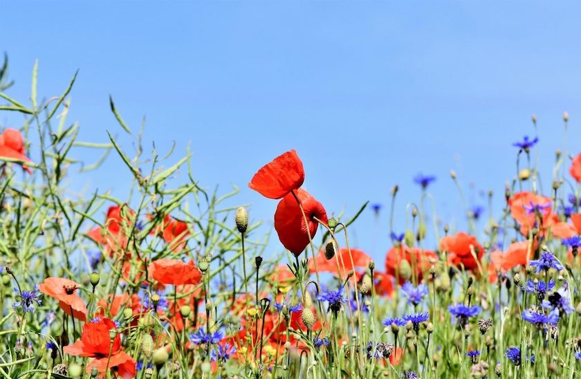 N'ayons pas honte de nos jardins fleuris !